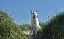 Free Dog Like Mammal, Dog, Dog Breed Group, Dog Breed Royalty Free Stock Images - 136081079