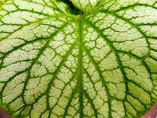 Free Leaf, Green, Plant, Plant Pathology Stock Photos - 136081373