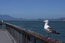 Free Bird, Seabird, Gull, Sea Stock Photo - 136081500