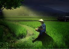 Free Field, Paddy Field, Agriculture, Grass Royalty Free Stock Photo - 136081545