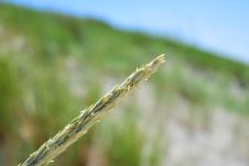Free Grass Family, Grass, Macro Photography, Close Up Royalty Free Stock Image - 136081616