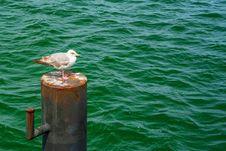 Free Water, Bird, Sea, Seabird Stock Images - 136081724