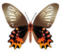 Free Butterfly Stock Photo - 13619990