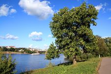 Free Tree In Park Stock Image - 13610951