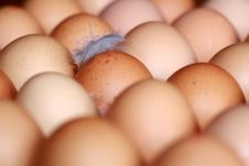 Free Eggs Stock Photography - 13611572