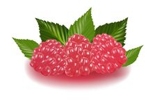 Free Raspberries With Leaves. Royalty Free Stock Photography - 13611947
