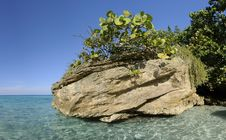 Free Rock With Vegetation On Cuban Shore Stock Image - 13613271