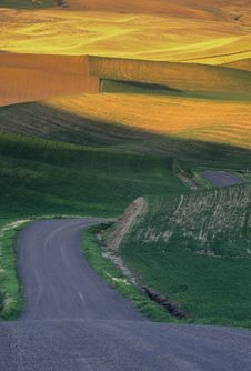 Free Palouse Wheat Fields And Road Royalty Free Stock Image - 13613916