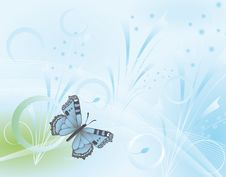 Free Butterfly Stock Image - 13615321