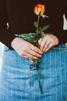 Free Close-up Photo Of Woman Holding Red Rose Flower Stock Photography - 136157342