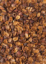 Free Shell Of Pine Nuts Royalty Free Stock Photo - 13626285