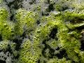 Free Green Cilia In Water Royalty Free Stock Photos - 13629438