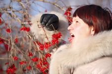 Free Winter Garden Stock Images - 13620004