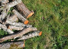 Fire Wood On Grass Stock Photography