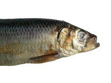Big Fish Royalty Free Stock Images