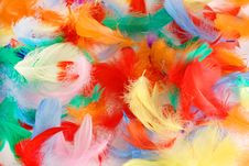 Free Feathers Stock Photography - 13623352