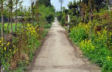 Pengzhou, China:  Country Lane Royalty Free Stock Image