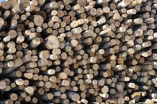 Free Birch Logs Stack Royalty Free Stock Photography - 13624167