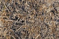 Free Brown Last Year S Dry Grass Background Stock Photo - 13624220
