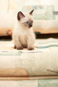 Little Kitten In The House, Playing Stock Photography