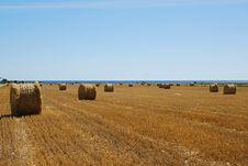 Free Harvest Stock Photo - 13624600