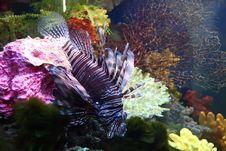 Free Exotic Saltwatrer Fish Royalty Free Stock Photo - 13624915