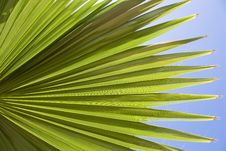 Free Palm Leaf Stock Photography - 13625892
