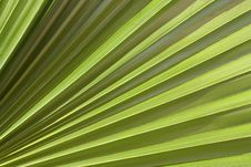 Free Palm Leaf Stock Photography - 13625912