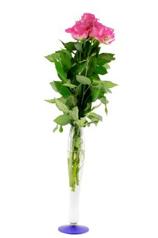 Free Pink Roses In Vase Stock Photos - 13626183