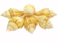Free Yellow Seashell Stock Image - 13628171