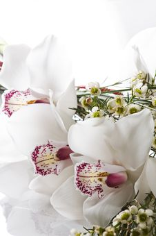 Free Orchid Stock Photography - 13628452