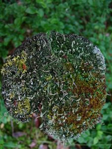 Free Stump With Lichen Royalty Free Stock Photography - 13628527