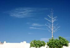 Free Dried Tree In The Blue Sky Stock Photos - 13628583