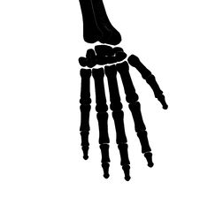 Free Skeleton Hand Bones Silhouette Royalty Free Stock Images - 13629719
