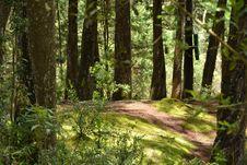 Free Vegetation, Forest, Ecosystem, Woodland Royalty Free Stock Photos - 136290158
