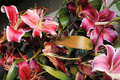 Free Discarded Withered Lily Flowers Stock Photo - 13638020