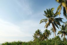 Free Coconut Palms And Blue Sky Stock Images - 13631264