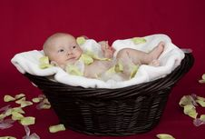 Free The Little Baby Girl In A Basket Royalty Free Stock Photos - 13631398