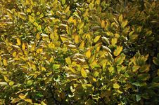 Free Leaves Pattern Stock Photos - 13631833