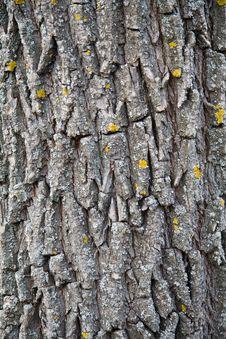 Free Tree Bark Stock Photos - 13632363