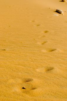 Free Desert Footprints Stock Image - 13635161