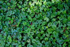 Free Jungle Carpet Stock Photo - 13635250