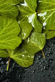 Free Leaf With Water Drops Stock Image - 13635661