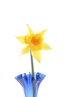 Free Closeup Of Daffodil In A Vase Stock Images - 13635854