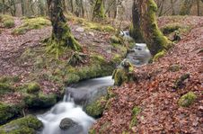 Free Wooded Stream Royalty Free Stock Photography - 13636937