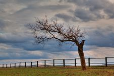Free Lonely Tree Royalty Free Stock Image - 13639776