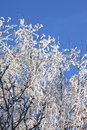 Free Winter Frost Branches Royalty Free Stock Image - 13642236