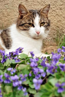 Free Cat Amongst Flowers Stock Images - 13640594