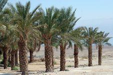 Free Palm Trees Royalty Free Stock Photo - 13641685