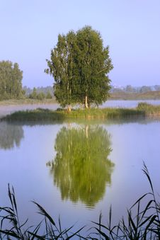 Free Summer Tree Reflected In Water Royalty Free Stock Images - 13641979